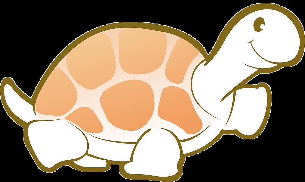 Turtle Cartoon Tortoise Clip Art Turtle Png Image And Clipart Art Clip Art Png Images
