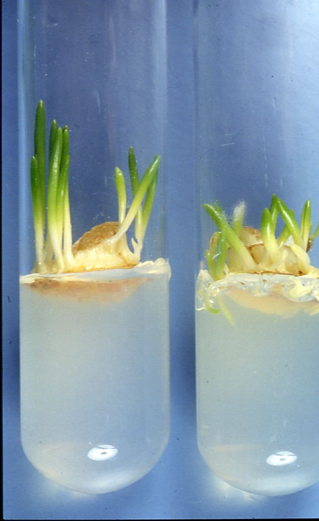plant tissue culture Buy and get information for mammalian cell culture, classical media, animal  cell culture.
