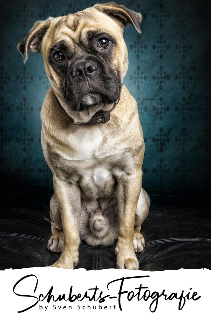 Wer Kennt Es Nicht Da Mochte Man Seinen Eigenen Hund