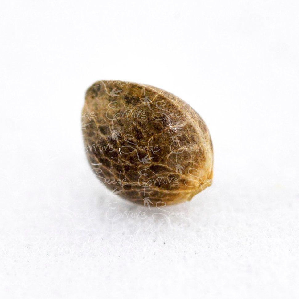 Семена конопли какие выбрать чем вредна и полезна конопля