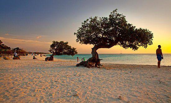 Palm Eagle Beach Aruba Beaches In