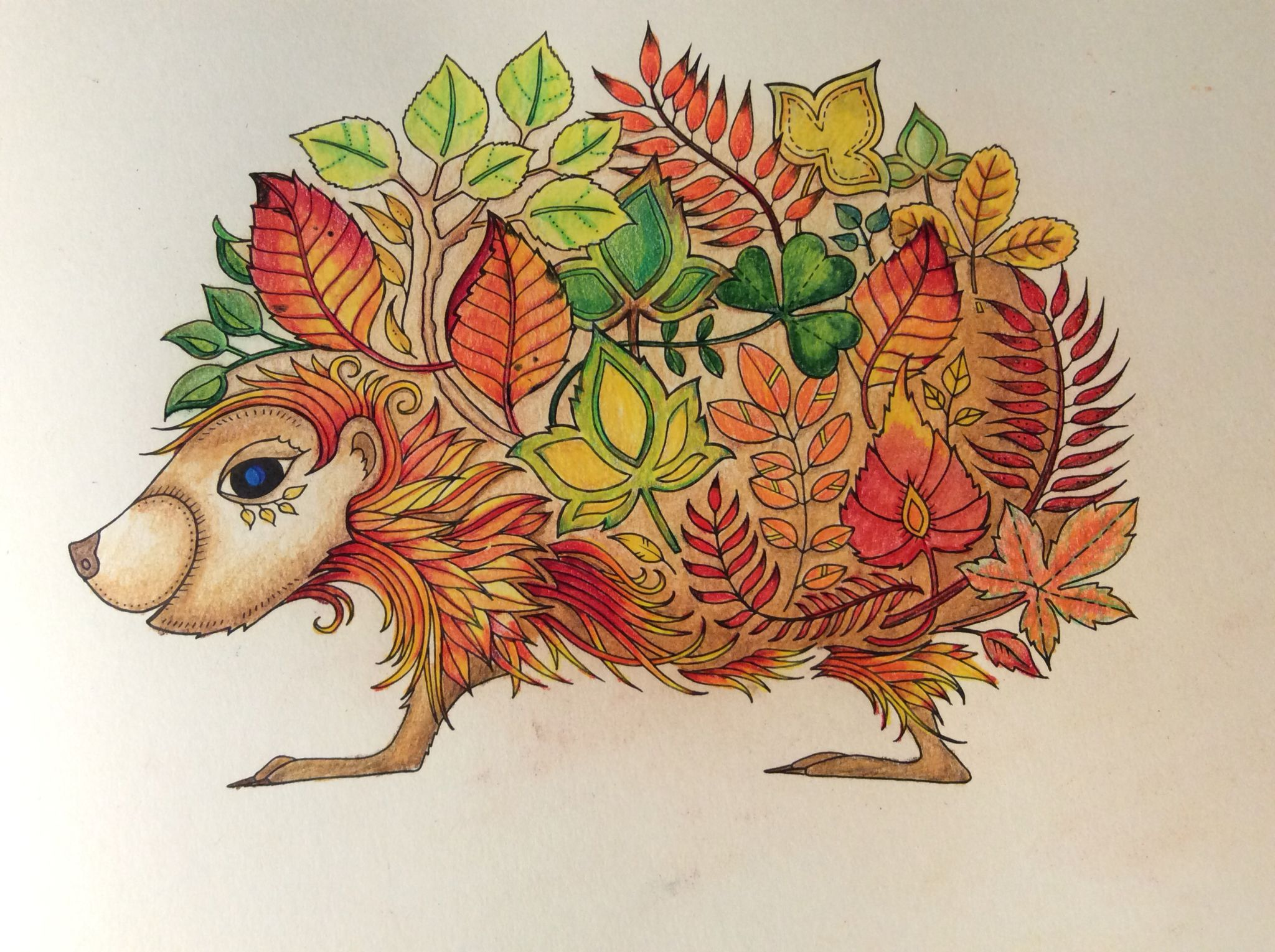 Hedgehog No Background Enchanted Forest Johanna Basford Cathyc Enchanted Forest Coloring Book Johanna Basford Enchanted Forest Enchanted Forest Coloring