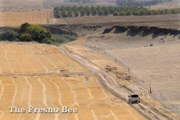 Rustic scenery of the site of McCaffrey's 5,200-home Tesoro Viejo development in Madera County, includes sown fields of wheat. JOHN WALKER — THE FRESNO BEE
