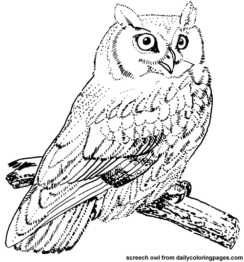 owl coloring pages Google Search sarah and olivia Pinterest