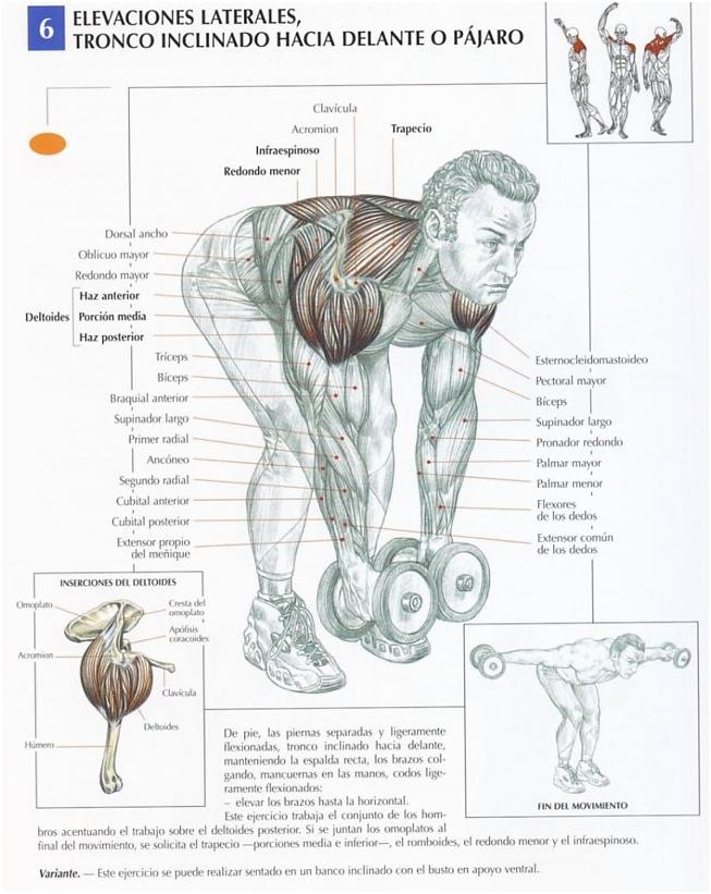 Mejores ejercicios de biceps volumen