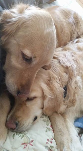 golden tenderness More
