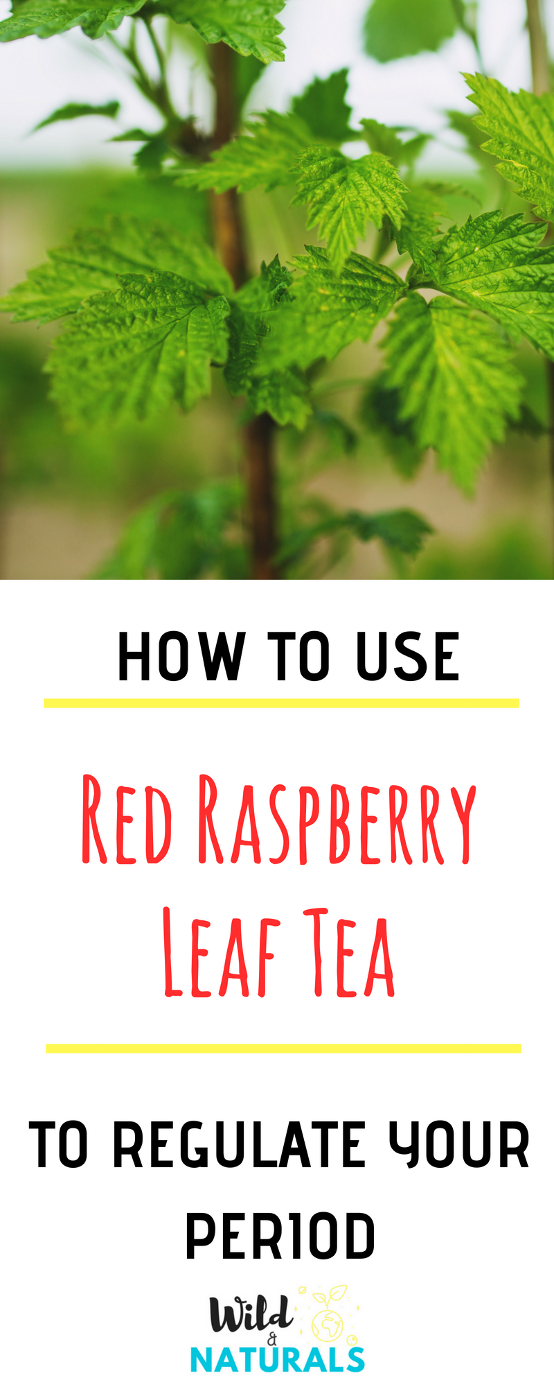 How To Regulate Periods With Raspberry Leaf Tea Natural Remedies