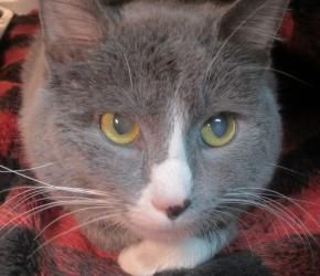 Adopt Smokey On Cute Animals Animal Rescue League Old Cats