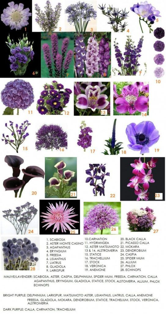 Pin by tiphanie hoy on wedding ideas pinterest wedding flowers dahlia floral design has made a list of the most readily available purple flowers in alberta check out the pictures and get inspired for your wedding mightylinksfo