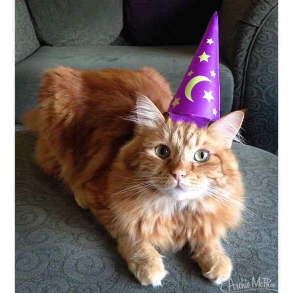 Inflatable Purple Wizard Hats For Magical Cats