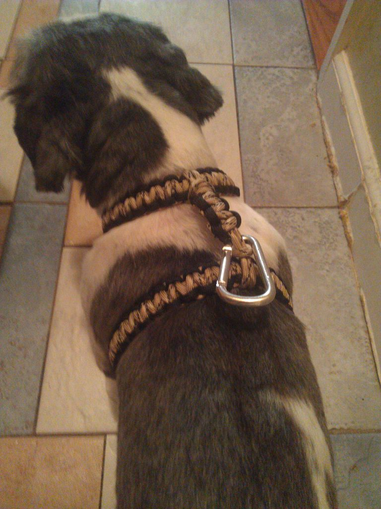 Paracord Dog Harness Paracord Dog Collars Paracord Projects