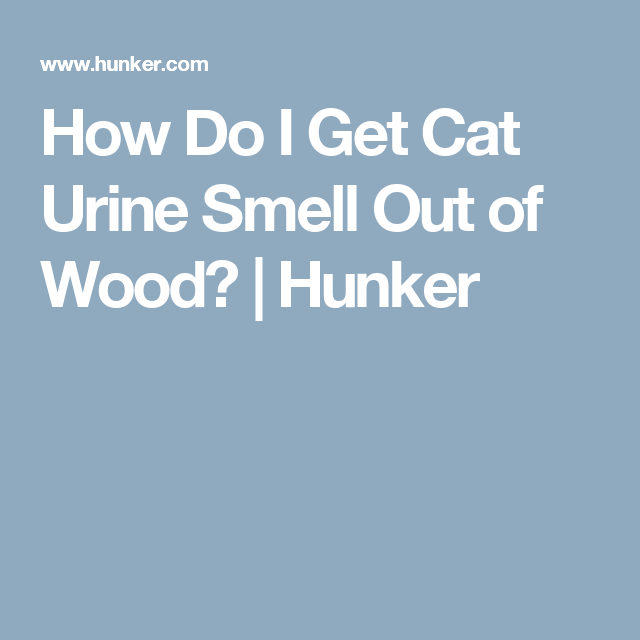 How Do I Get Cat Urine Smell Out Of Wood Hunker