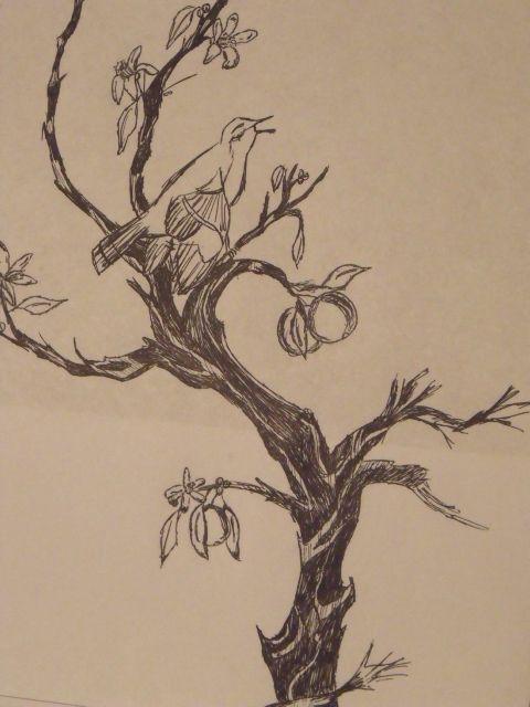 Mocking bird in an Orange tree ink sketch   Tree sketches ...