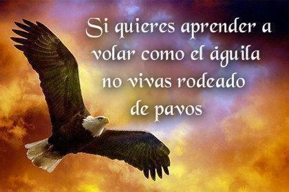 Frases En Imagenes De águila Real Imagenes De Aguilas