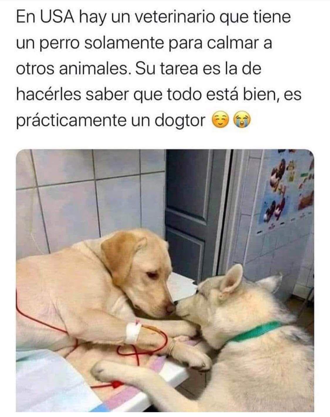 Sabueson On Twitter Memes Perros Historias De Perros Humor De Perros