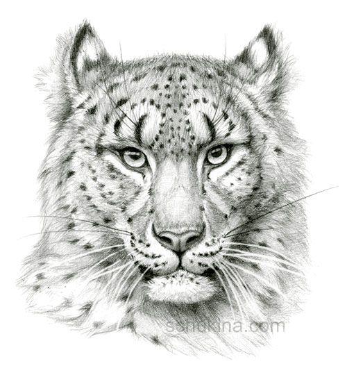 Leopard Pencil Drawings Snow Leopard sketch po...