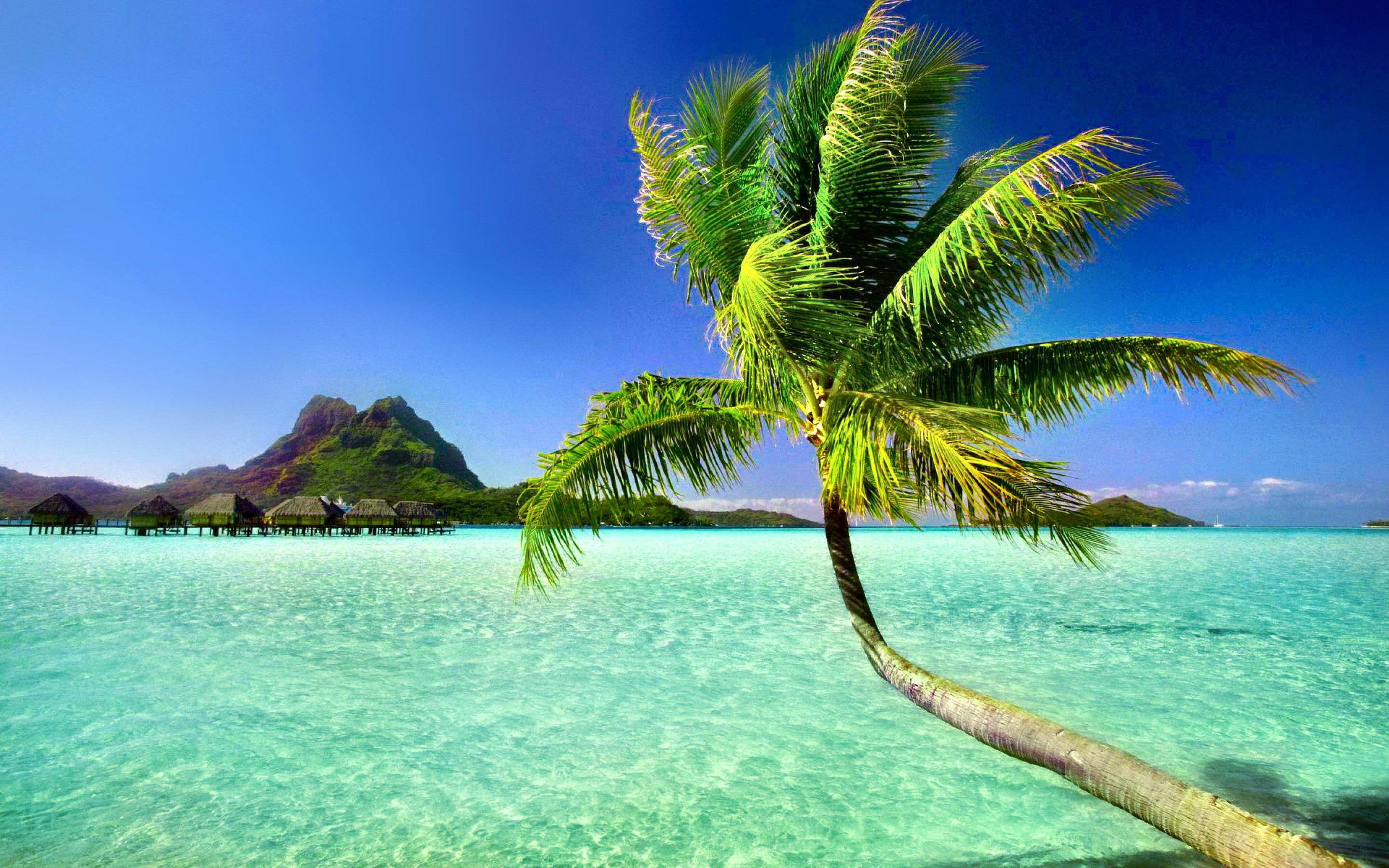 Palm Tree Wallpapers 6885384 Palm Trees Wallpaper Tropical