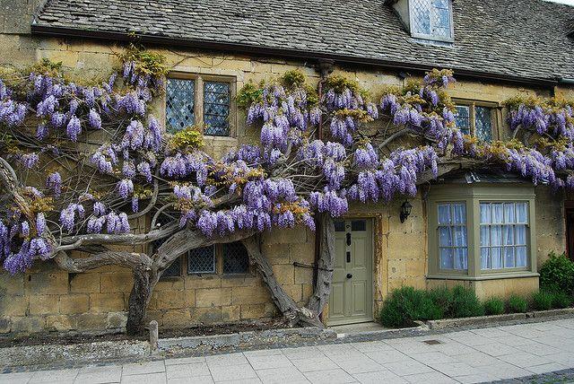 The Top Ten Front Door Paint Colours For Cotswold Stone Houses Dulux Lizard