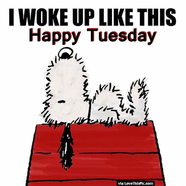 Good Morning Snoopy Quotes : I woke up like this happy tuesday good morning