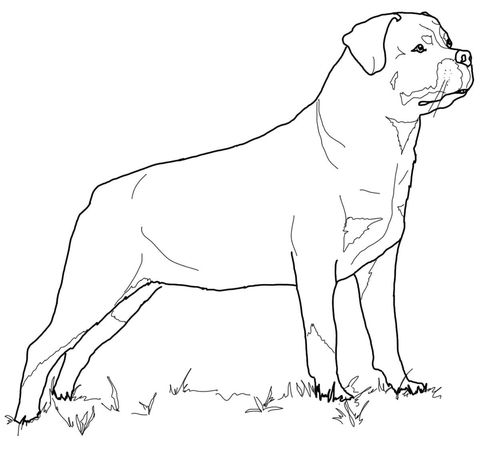 Rottweiler Coloring Page From Dogs Category Select From 20946 Printable Crafts Of Cartoons Nature A Dog Coloring Page Puppy Coloring Pages Dog Coloring Book