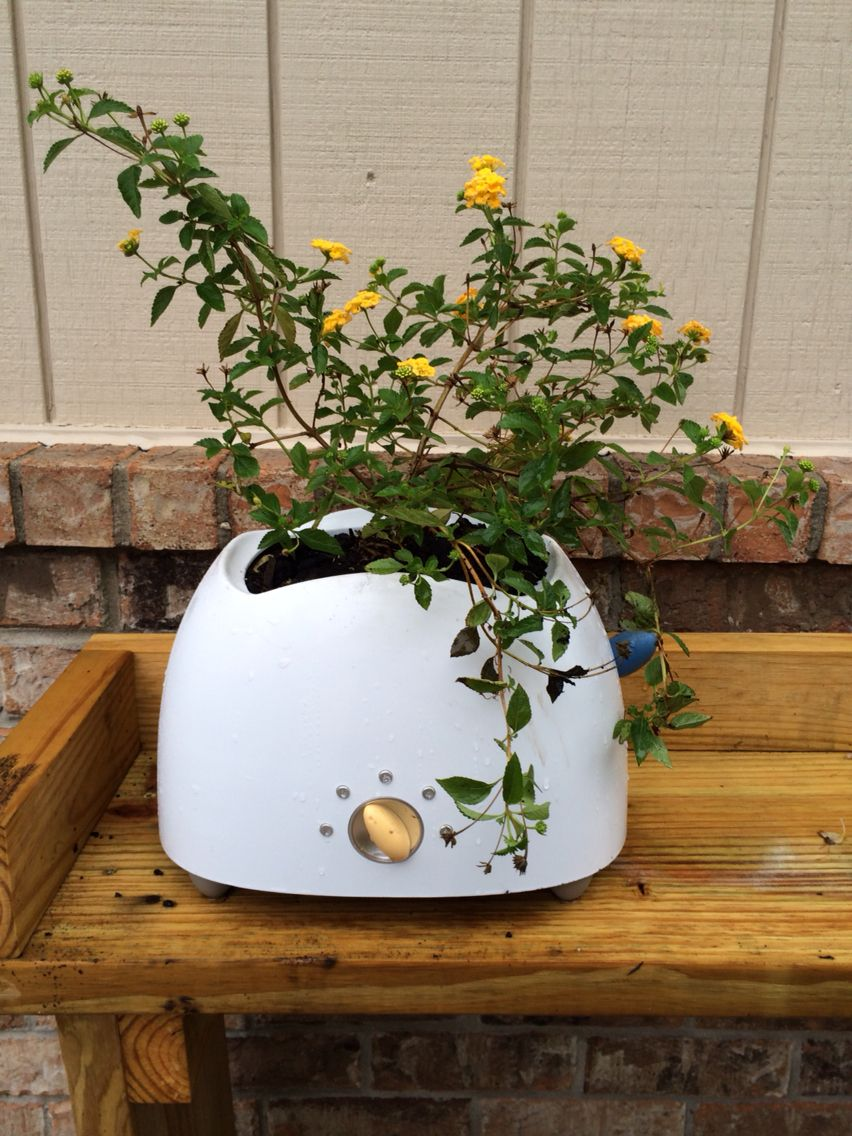 Old toaster turned into a fun planter Fun planters