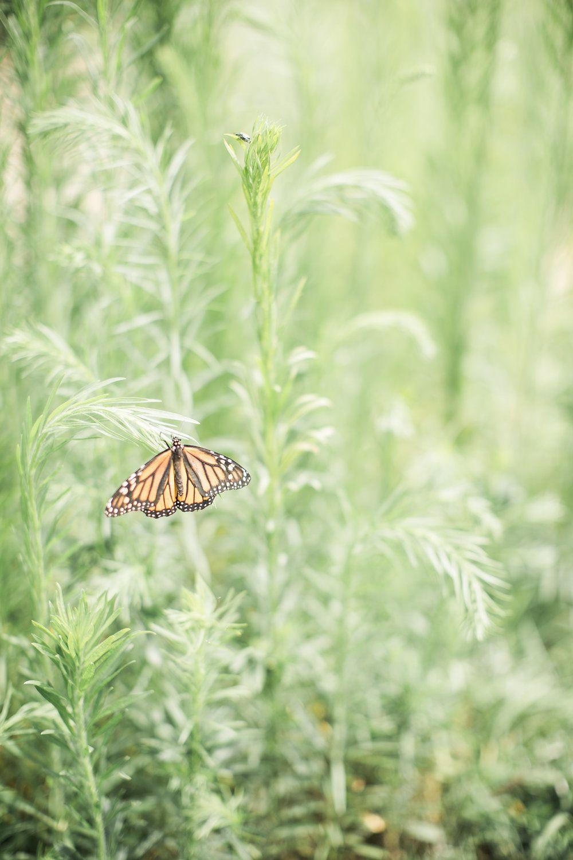 Butterfly Release at Ashton Hill Farm butterfly release