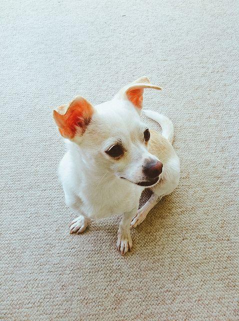 26 Ideas De Mascotas Mascotas Camas De Gato Camas Para Perros