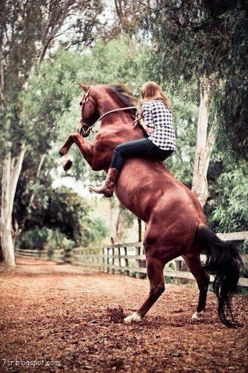 صور حصان صور خيول عربية أصيلة صور خيل Horses Horse Pictures Animals
