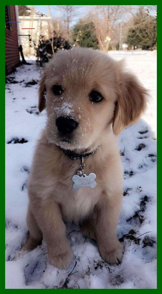 Animalesbebebonitos In 2020 Tiere Babyhunde Welpen