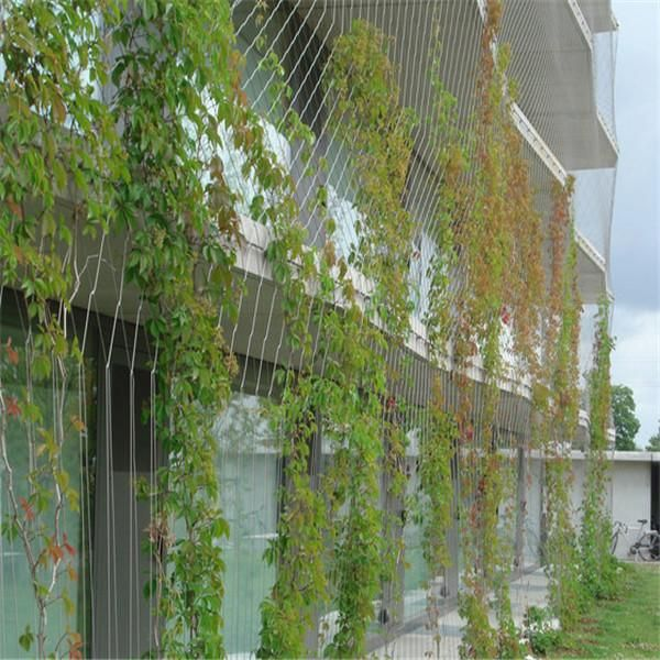 Steel Wire Rope Climbing Plant Green Facade Green Wall