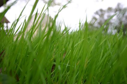 How to Improve a Clay Soil Lawn | Gardening | Lawn