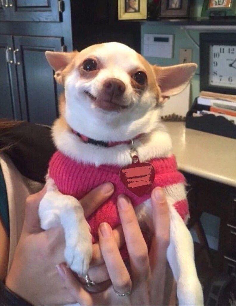 The Daily Scramble Cute Animal Memes Funny Dog Memes Cute Dogs