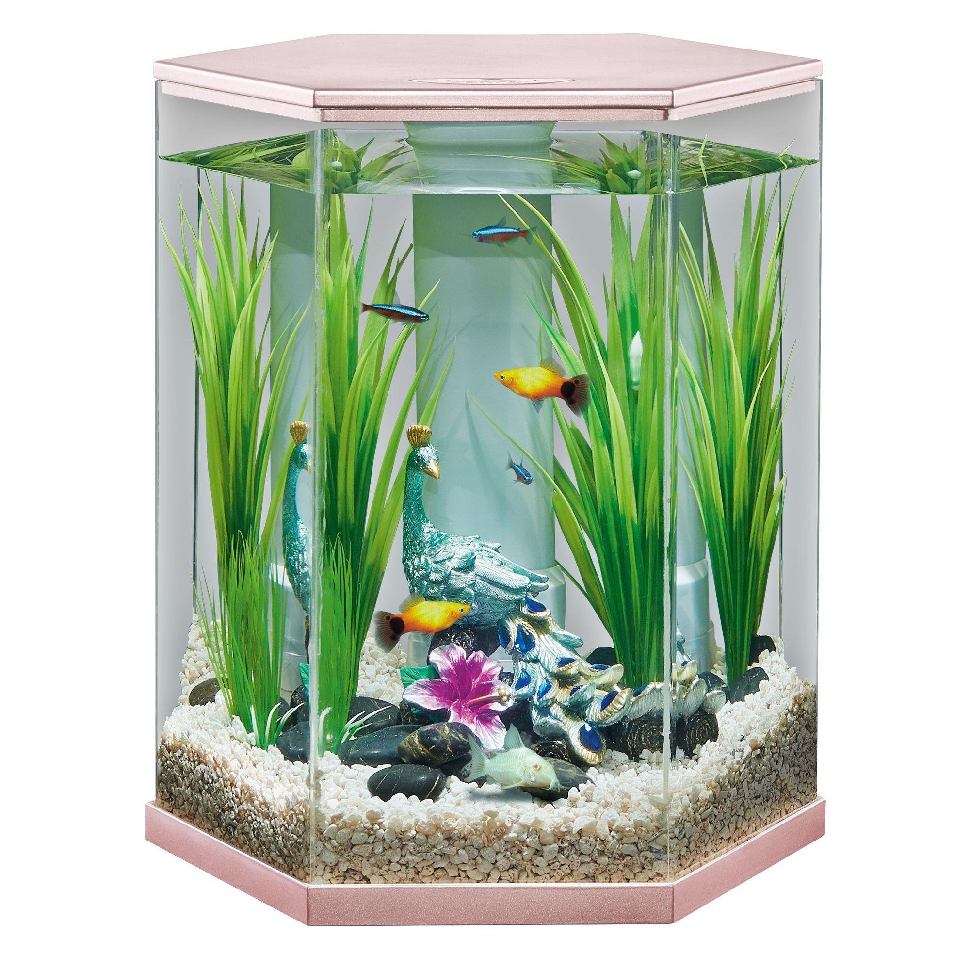 Top Fin Serenity Vivid View 360 Aquarium 3 Gallon In 2020 Diy Fishing Decor Pet Spray Pet Fish