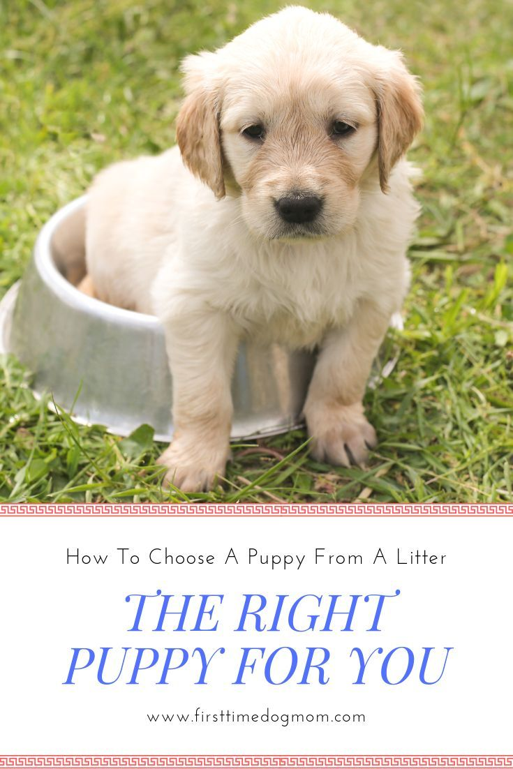 Choosing a puppy is exciting but you want to make sure