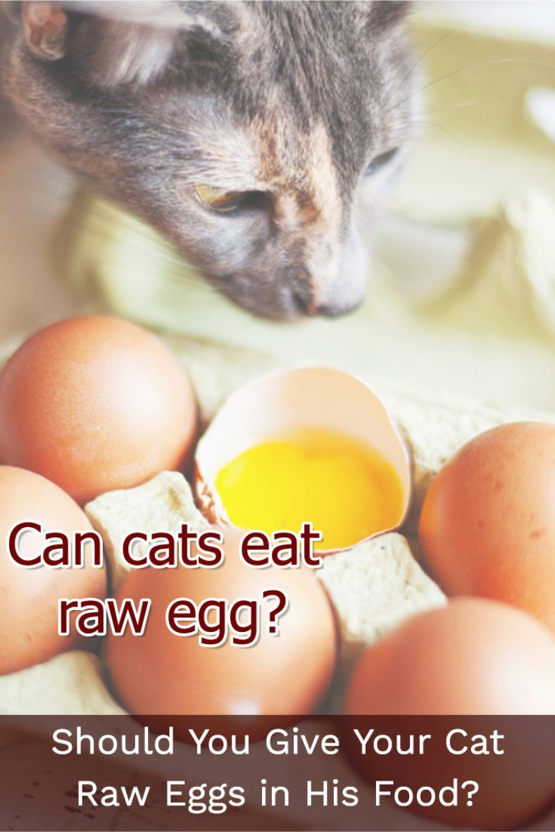 Should You Give Your Cat Raw Eggs in His Food? Eggs