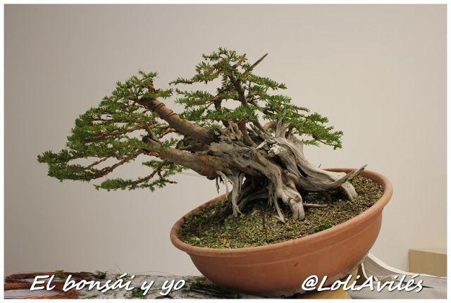 El bonsái y yo: Tantai 2015: la demo de David Quintana