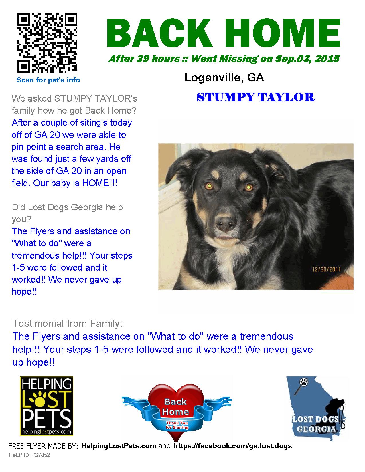 Helping Lost Pets Dog Australian Shepherd Back Home Losing