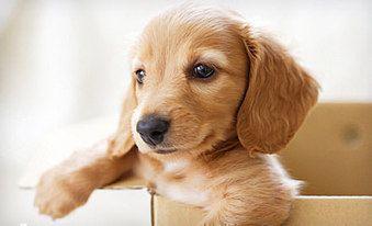 83 Off 9 980円 ペットとアロマで快適な暮らしを ペットアロマセラピスト通信課程 8種の精油 制作キット付 総合学園メンタルセラピスト専門学院 クーポンサイトjp ダックスフント子犬 可愛すぎる動物 可愛い犬