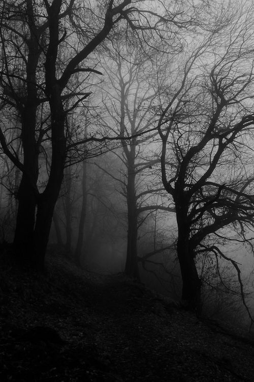 the Trees seem to come alive when you're alone in the forest at night...