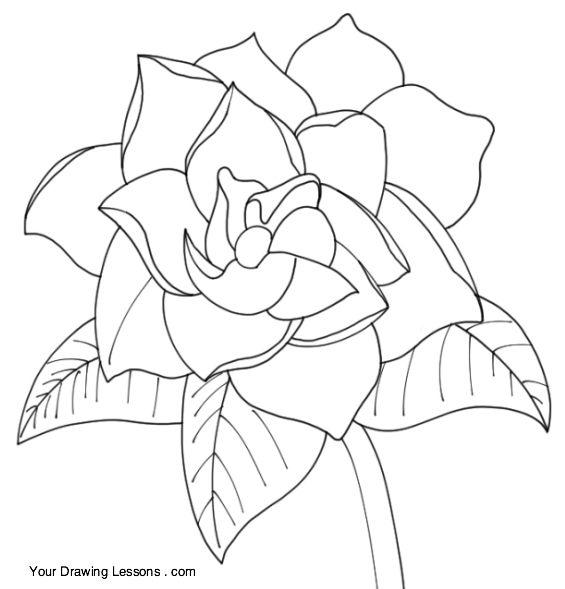 Gardenia Flower Drawing Drawings Flower Drawing Flower Drawing Tutorials