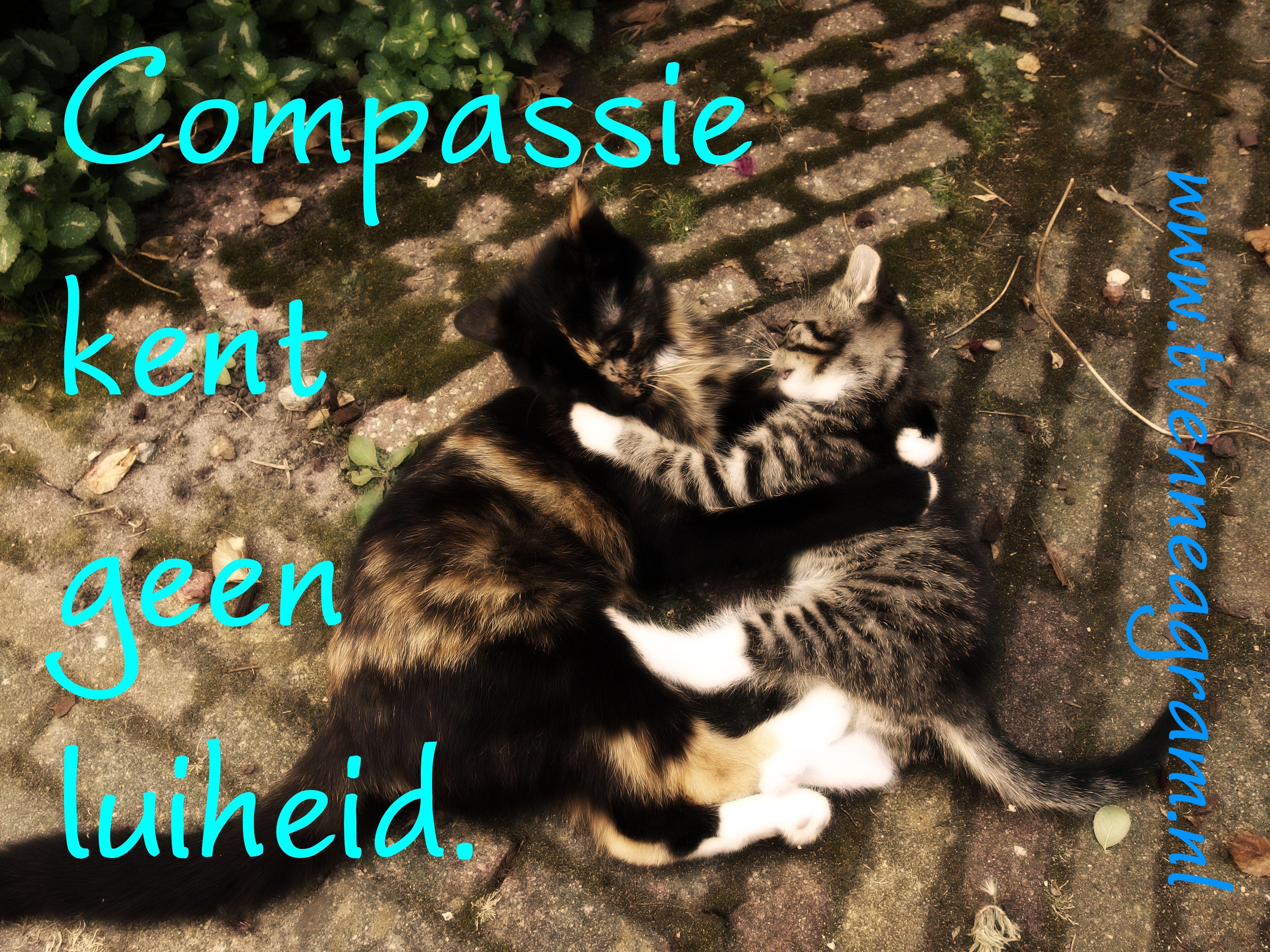 compassie luiheid enneagramtype 9