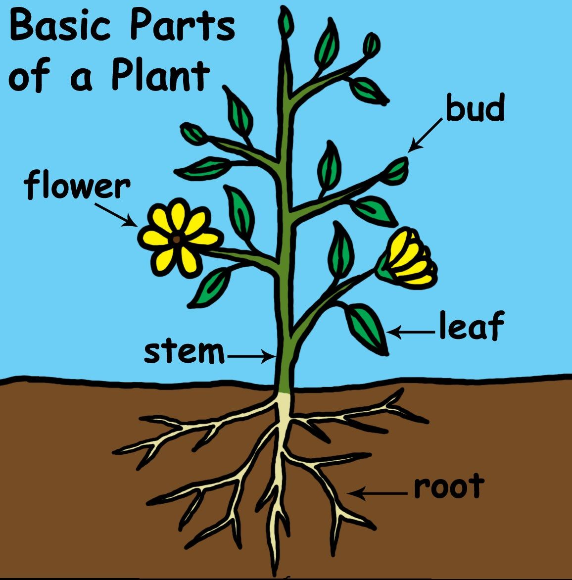 Plant Diagram With Images