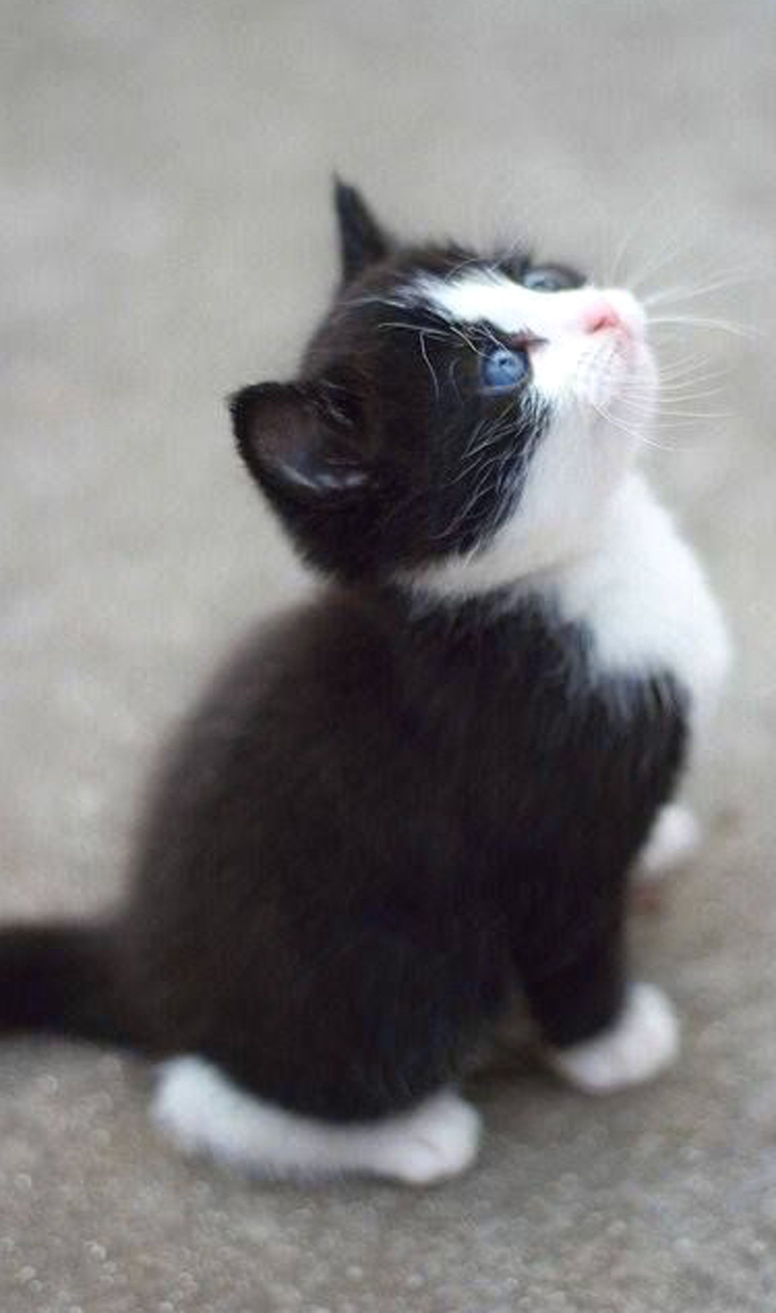 Pin by Chantel Erickson on Best Cat Photos Cats, Kittens
