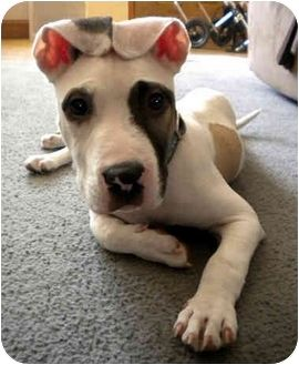 Paco Needs A Forever Home Philadelphia Pa Pitbull Rescue Pitbulls American Pitbull Terrier I Love Dogs