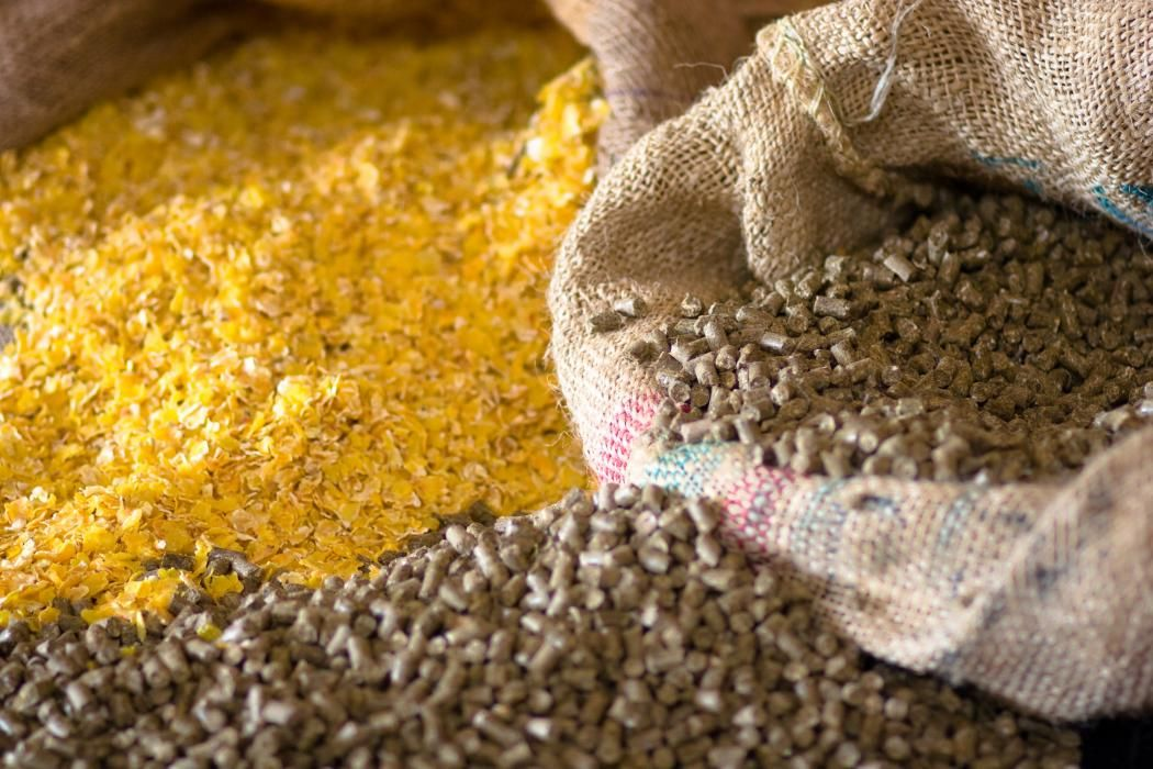 Quality Animal Feed with SSCL Food, Food safety, How to