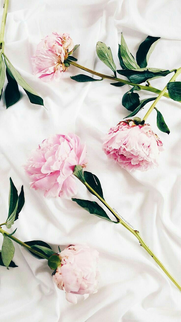 Ghim của Asin smile trên Background Fruits&Flowers Ảnh