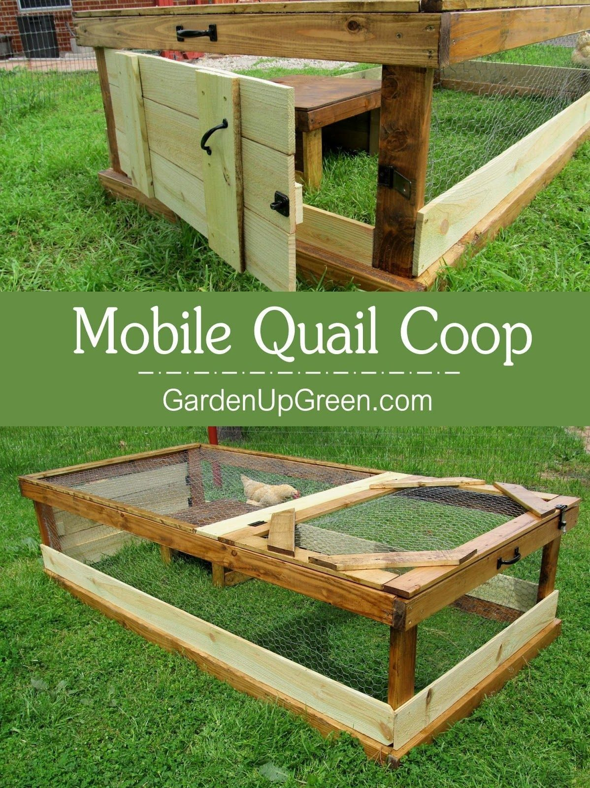 Thinking About Raising Quail In Your Backyard This Mobile Quail Coop Is A Great Option For Raising Quail In A Natur Quail Coop Raising Quail Chickens Backyard Diy backyard quail coop