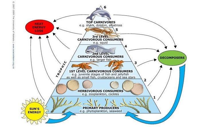 STUDENT ACTIVITY: Build a marine food web - In this activity ...