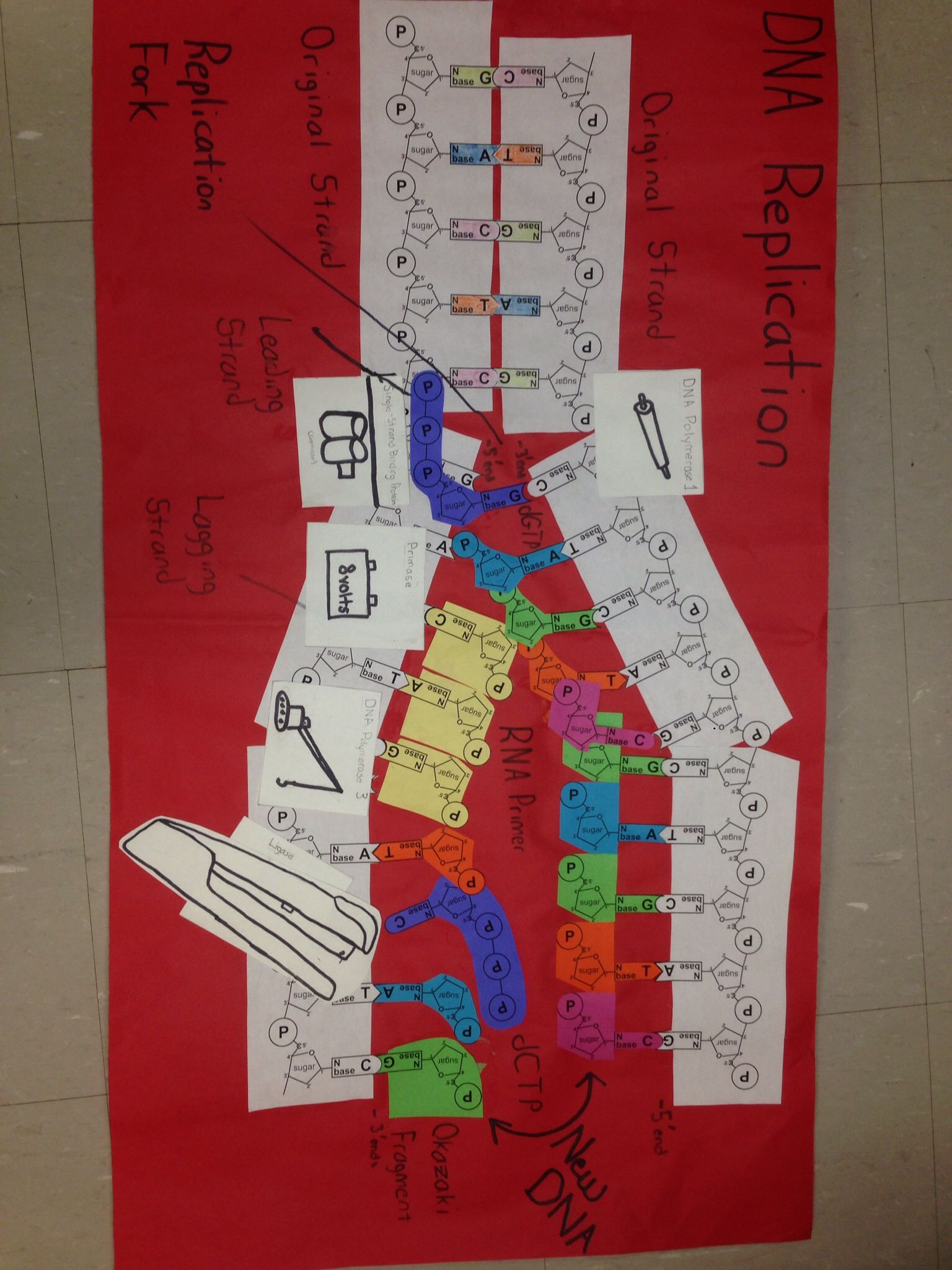 Biology Projects DNA Replication