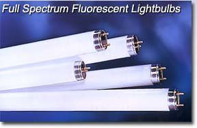 Full Spectrum Fluorescent Lamps Philips Tl 950 T8 98 Cri 5000 K 48 32 Watt T8 Case Of 25 Fluorescent Lamp Fluorescent Bulb Fluorescent